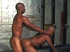 Black stallion getting nastily pounded