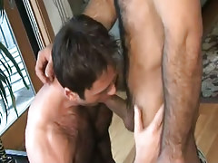 Hairy gay sucks appetizing weenie