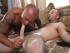 Hairy faggot sucked by latin stud on ottoman
